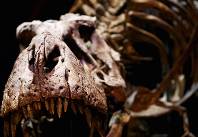Descoberto no Uzbequistão, dinossauro antecessor de T-Rex viveu há 90 milhões de anos