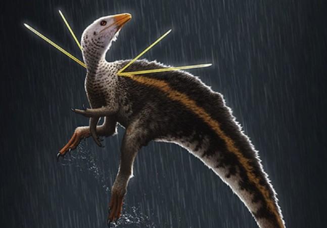 Entenda disputa Brasil x Alemanha pelo fóssil do dinossauro Ubirajara