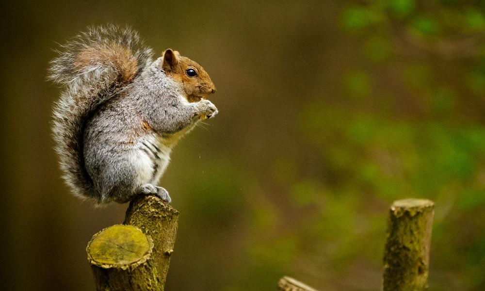 Esquilos tem traços de personalidade tão diversos quanto humanos