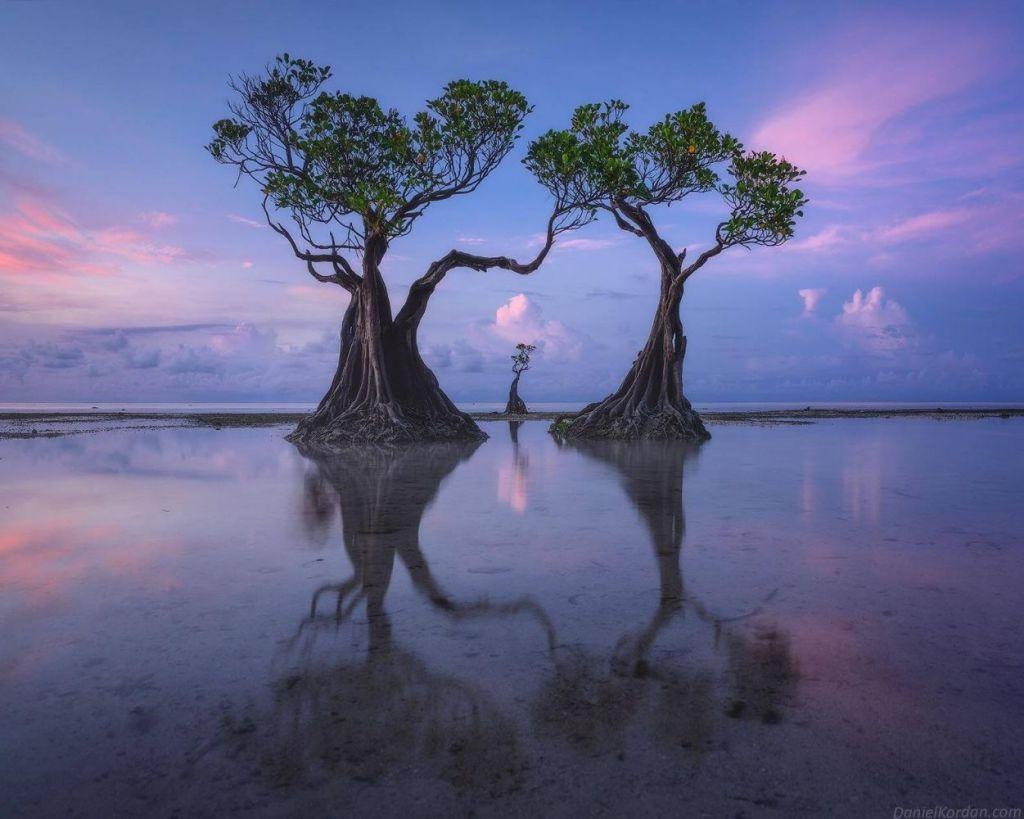 As incríveis árvores dançarinas da ilha de Sumba, na Indonésia