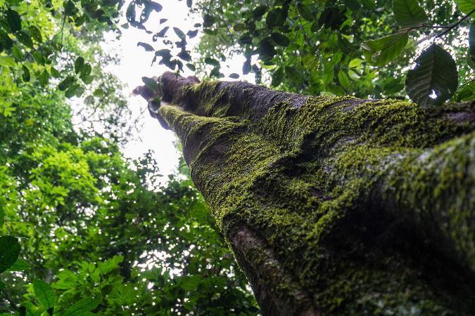 Movimento de ajuda a doar árvores para ajudar a recuperar áreas desmatadas do Brasil