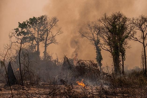Incêndio no Pantanal
