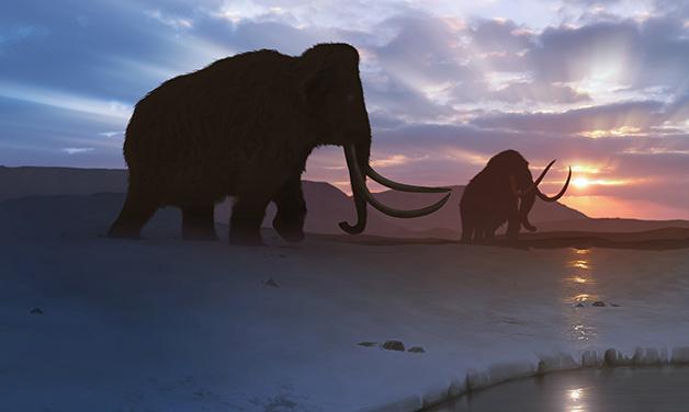 Recriação artística de mamutes caminhando pela tundra