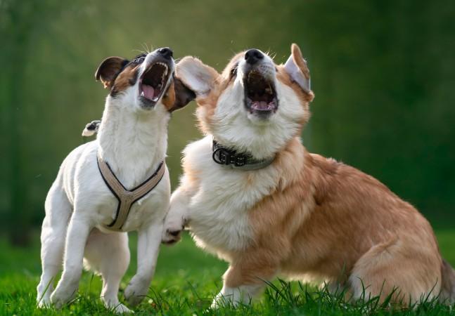 Coleira de cachorro inteligente diz ser capaz de traduzir latidos em emoções