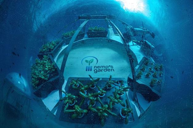 Nemo's Garden