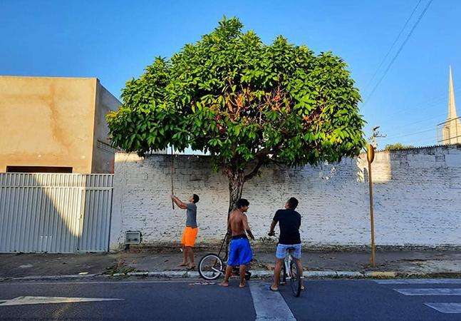 O pé de jambo que há 20 anos une vizinhança pelo amor na cidade de Chico Anysio