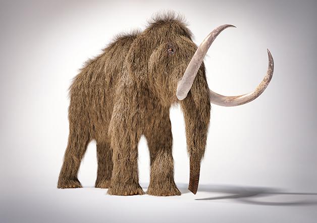 Recriação artística do mamute