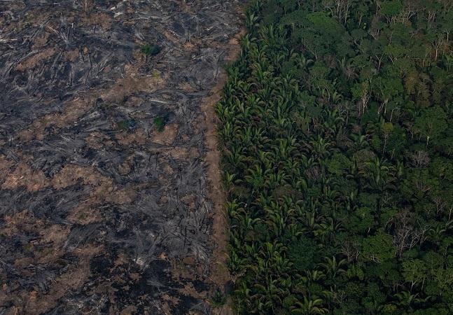 Incêndios podem ter afetado até 85% das espécies ameaçadas da Amazônia