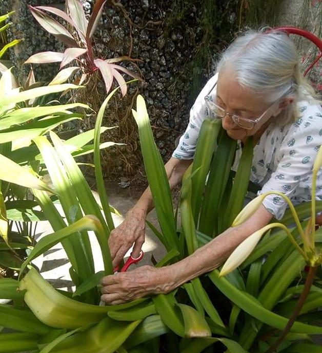 Dona Maria cuidou da árvore por 20 anos