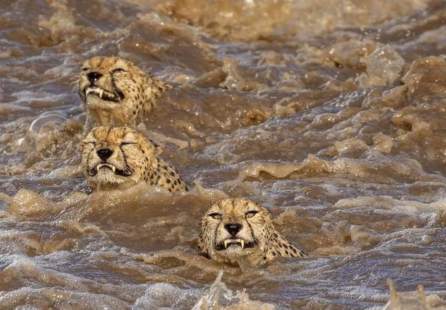 Eleição de fotógrafo do ano ostenta imagens incríveis de animais na natureza