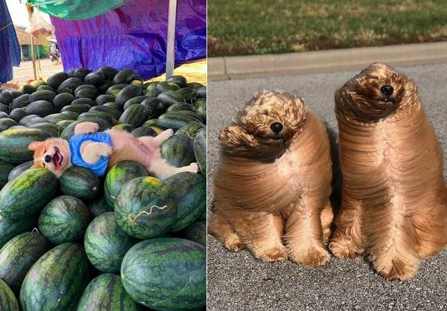 27 fotos de animais impossíveis de explicar
