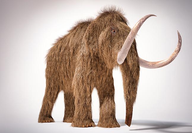 Mamute extinto há 10 mil anos pode ser ressuscitado com investimento de US$ 15 milhões