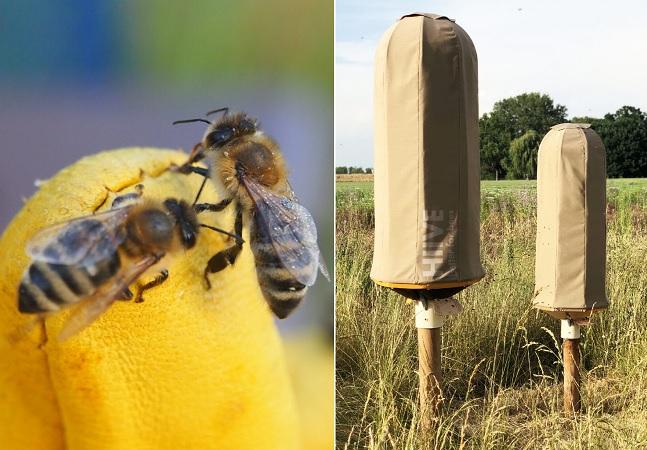 Colmeia inteligente e feita de plástico é proteção a mais para abelhas