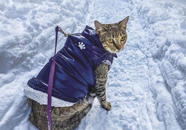 No frio do Monte Jackson, Floki usa roupas especiais
