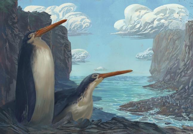 Alunos descobrem fóssil de pinguim gigante desconhecido em trabalho de campo