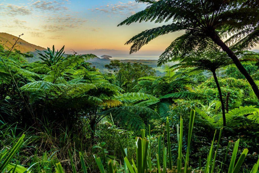 Parque Nacional Daintree é devolvido aos aborígenes da Austrália