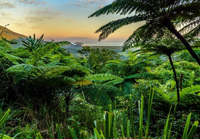 Floresta tropical de 180 milhões de anos é devolvida aos aborígenes