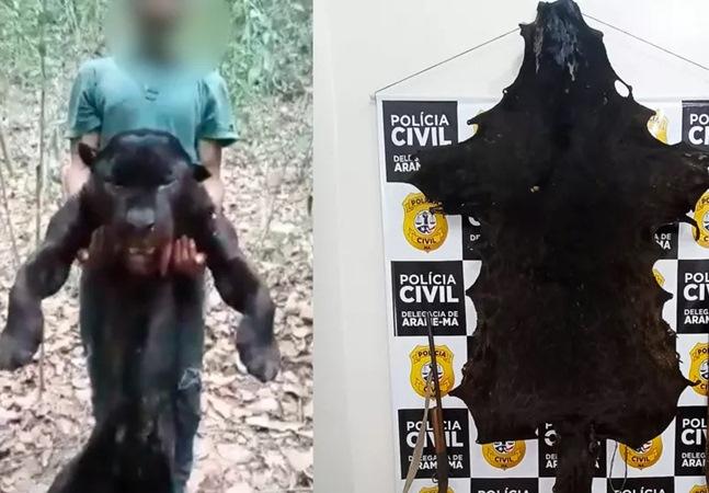 Polícia do Maranhão prende homem suspeito de matar onça preta e publicar vídeo na internet