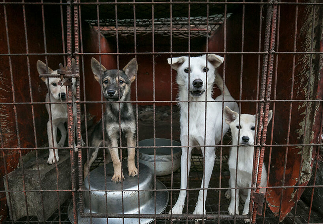 Presidente da Coréia do Sul quer reconsiderar consumo de carne de cachorro no país