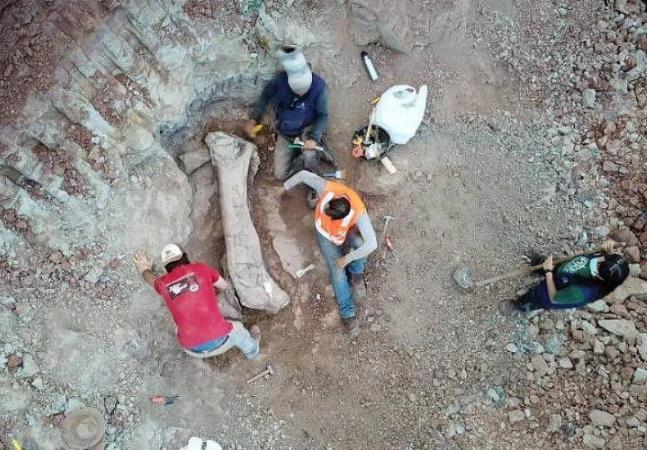 Fóssil de dinossauro desconhecido por pesquisadores é encontrado durante obra no Maranhão