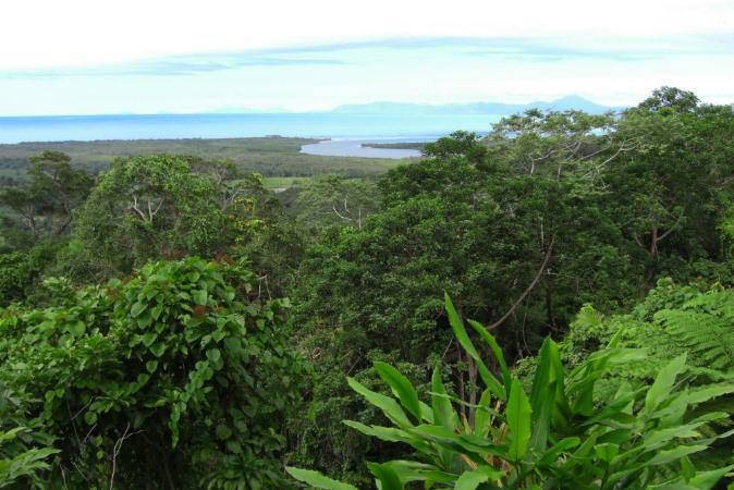 Austrália devolve a enorme floresta tropical de Daintree a aborígenes na fronteira com a Grande Barreira de Corais