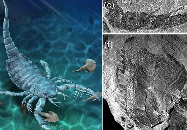 Fóssil de escorpião do mar do tamanho de um cachorro é descoberto no Mar da China