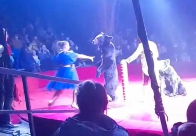 Urso de circo ataca treinadora grávida e reforça debate sobre animais em shows; veja vídeo