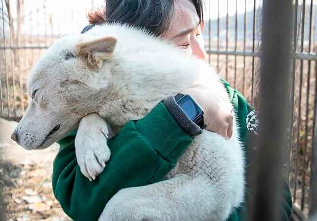 Cães experimentam carinho e amor pela 1ª vez após serem salvos de fazenda de carne na Coréia do Sul