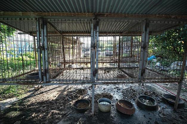 jaula de cachorros em fazenda de carne canina na Coréia do Sul