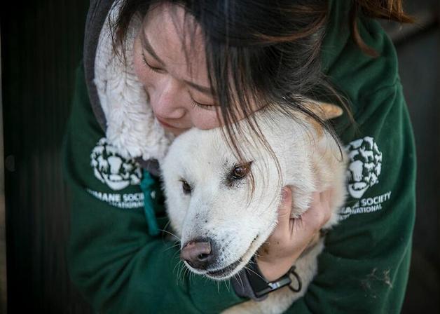 Cachorros em fazenda de carne canina na Coréia do Sul