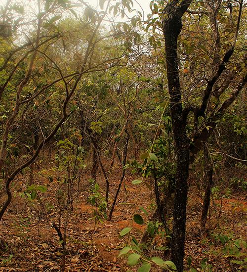 Ao norte de Minas, população geraizeira pratica agroecologia para salvar o cerrado e suas tradições